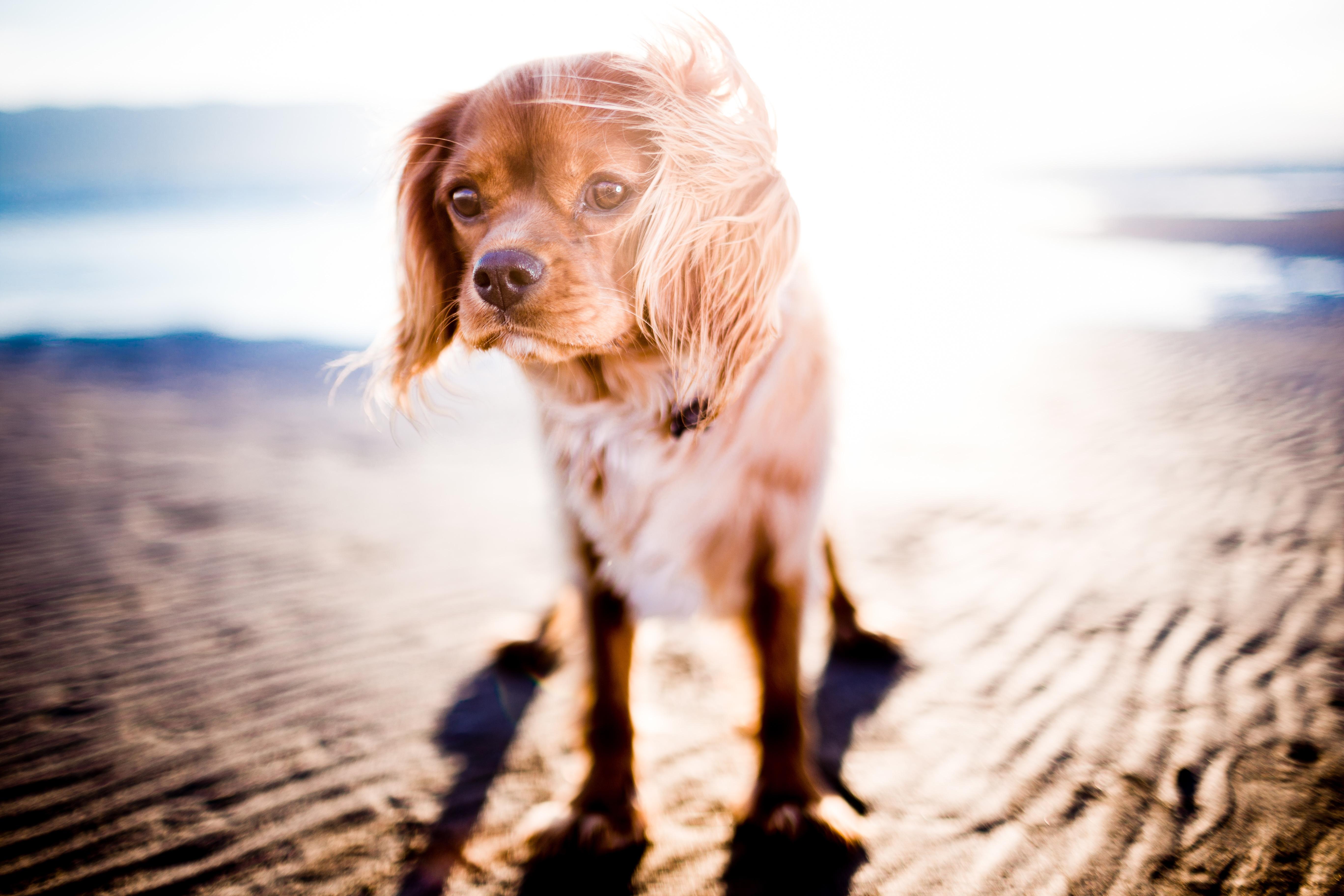 Comment photographier votre chien en mouvement?